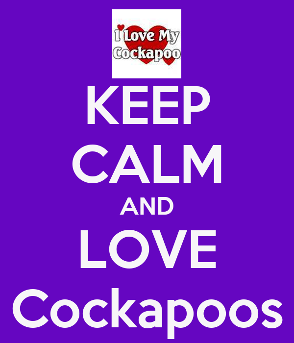 KEEP CALM AND LOVE Cockapoos