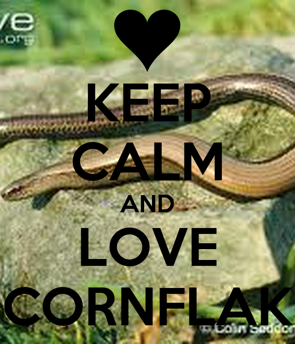 KEEP CALM AND LOVE CORNFLAK
