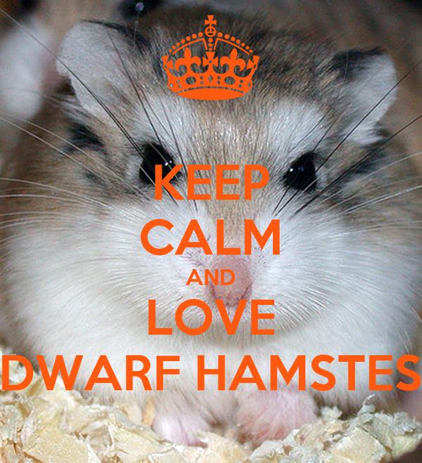 KEEP CALM AND LOVE DWARF HAMSTES