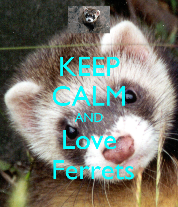 how to keep ferrets from smelling