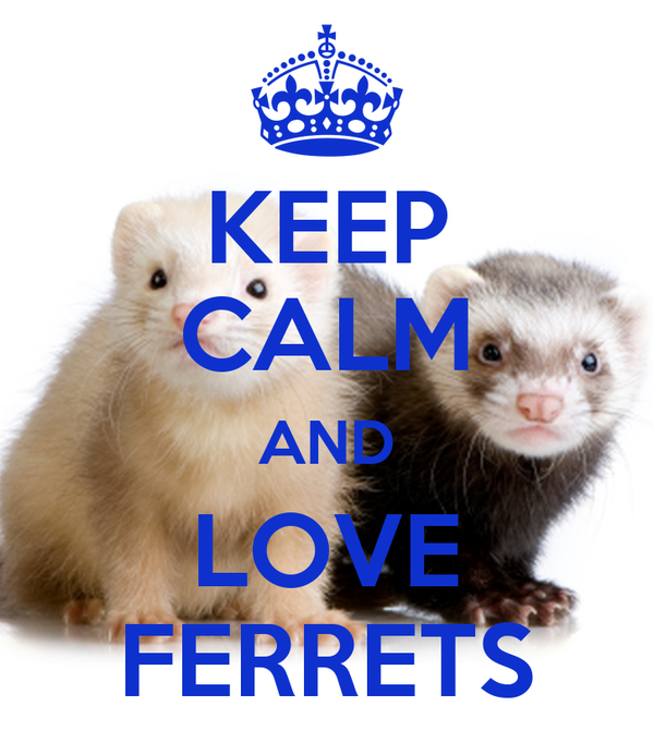 KEEP CALM AND LOVE FERRETS