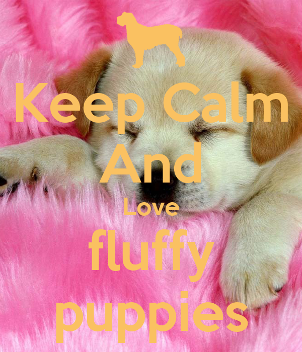 Keep Calm And Love fluffy puppies