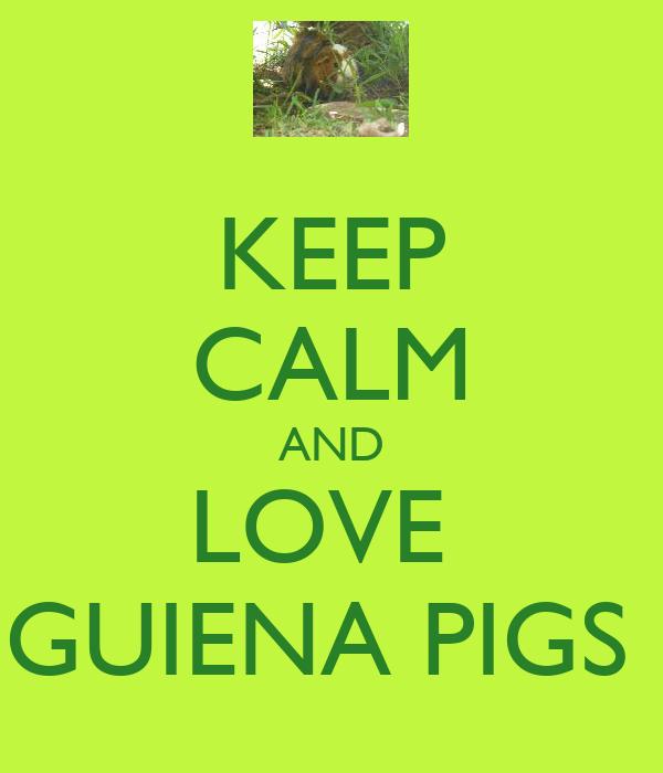 KEEP CALM AND LOVE  GUIENA PIGS