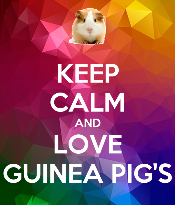 KEEP CALM AND LOVE GUINEA PIG'S