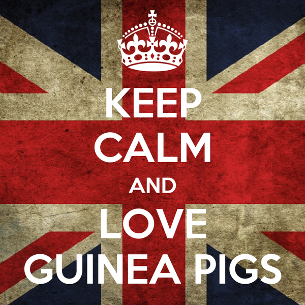 KEEP CALM AND LOVE GUINEA PIGS