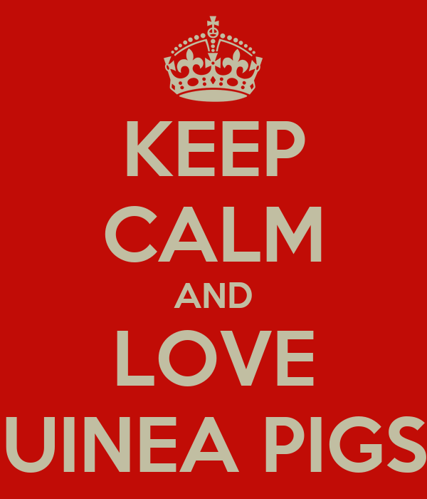 KEEP CALM AND LOVE GUINEA PIGS!!!