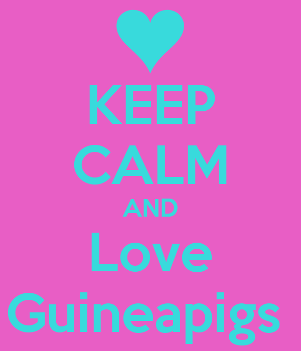 KEEP CALM AND Love Guineapigs