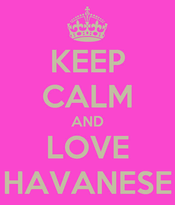 KEEP CALM AND LOVE HAVANESE