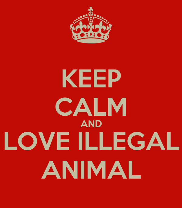 KEEP CALM AND LOVE ILLEGAL ANIMAL
