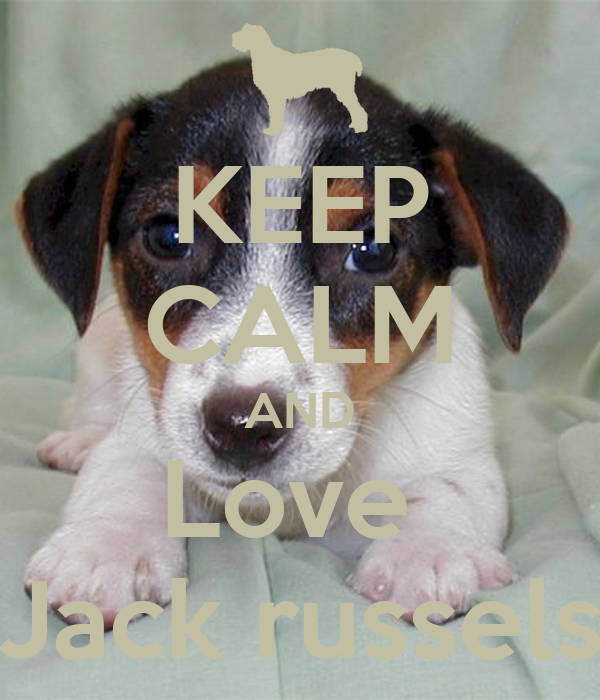 KEEP CALM AND Love  Jack russels
