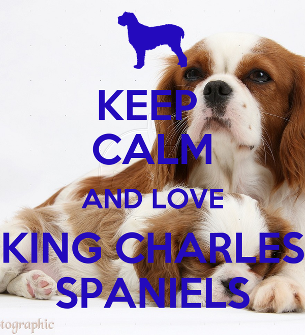 KEEP  CALM AND LOVE KING CHARLES SPANIELS