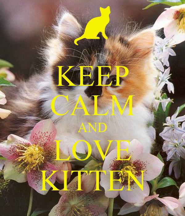 KEEP CALM AND LOVE KITTEN