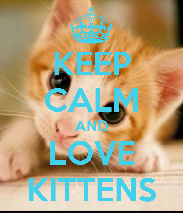KEEP CALM AND LOVE KITTENS