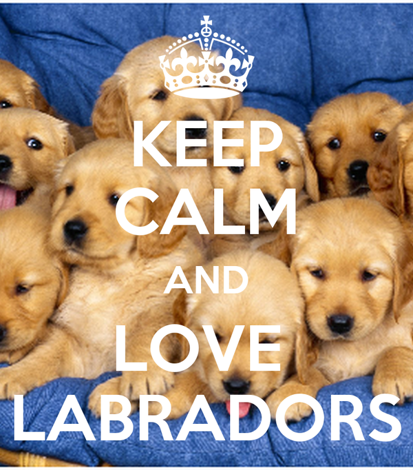 KEEP CALM AND LOVE  LABRADORS