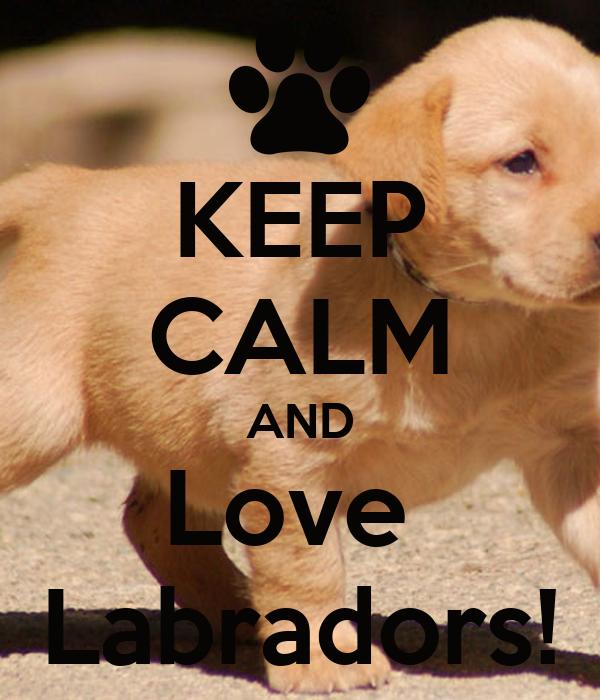 KEEP CALM AND Love  Labradors!