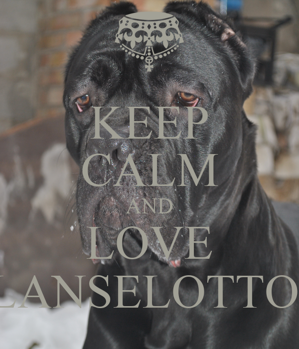 KEEP CALM AND LOVE LANSELOTTO