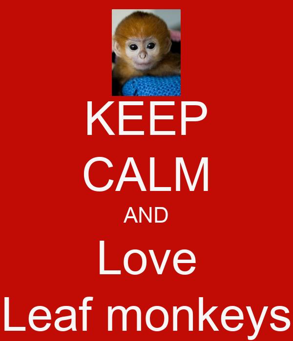 KEEP CALM AND Love Leaf monkeys