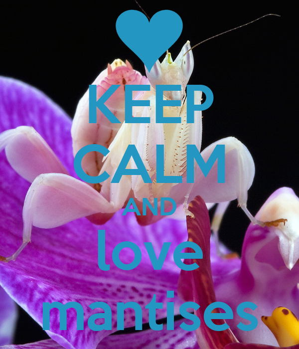 KEEP CALM AND love mantises