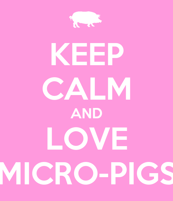 KEEP CALM AND LOVE MICRO-PIGS