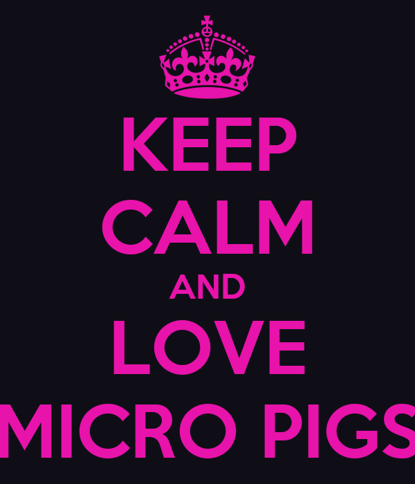KEEP CALM AND LOVE MICRO PIGS