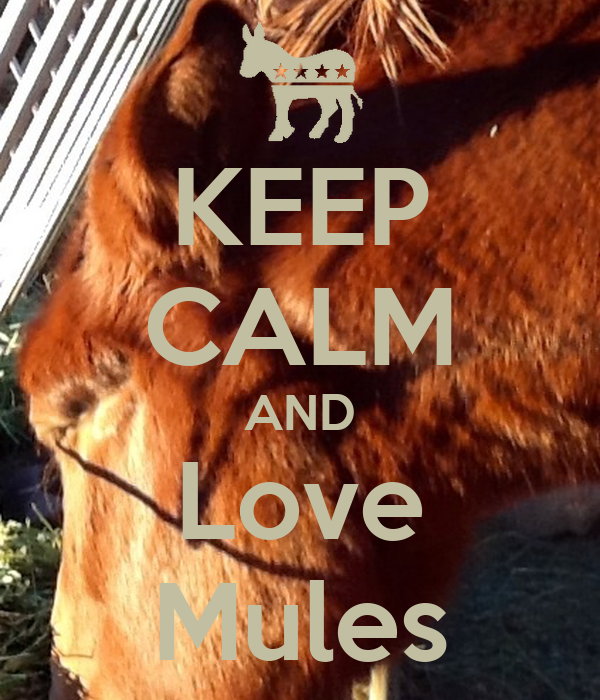 KEEP CALM AND Love Mules