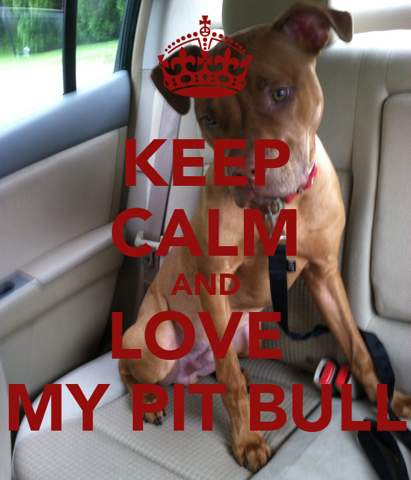 KEEP CALM AND LOVE  MY PIT BULL