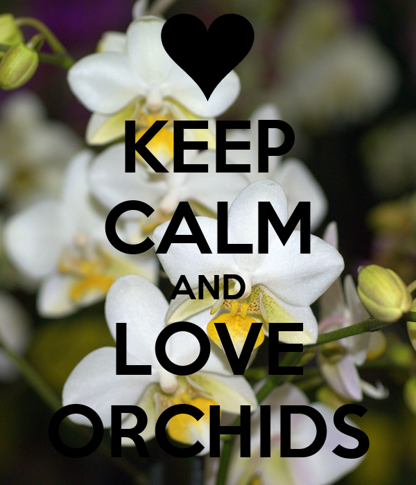 KEEP CALM AND LOVE ORCHIDS