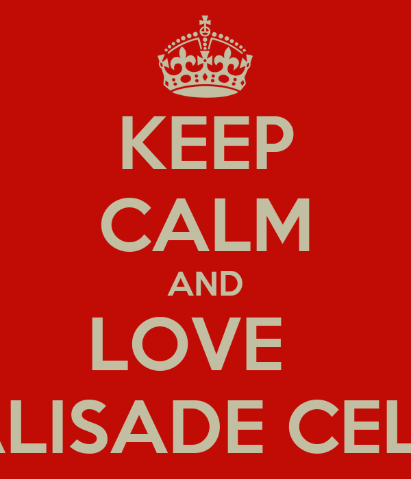 KEEP CALM AND LOVE   PALISADE CELLS