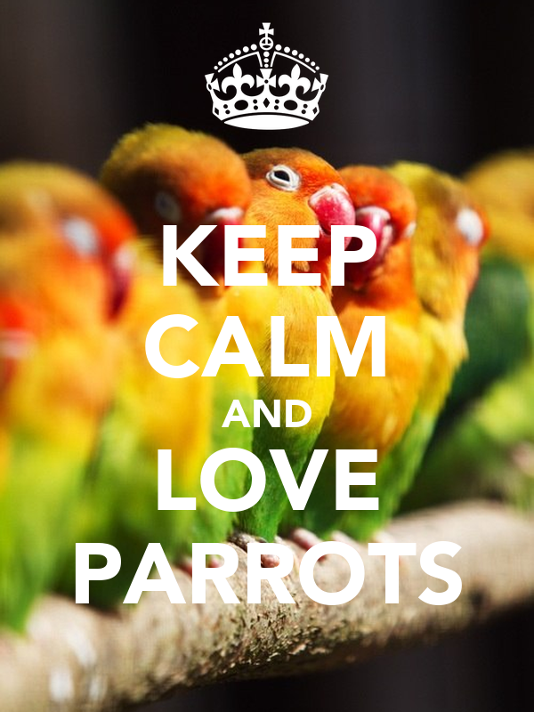 KEEP CALM AND LOVE PARROTS