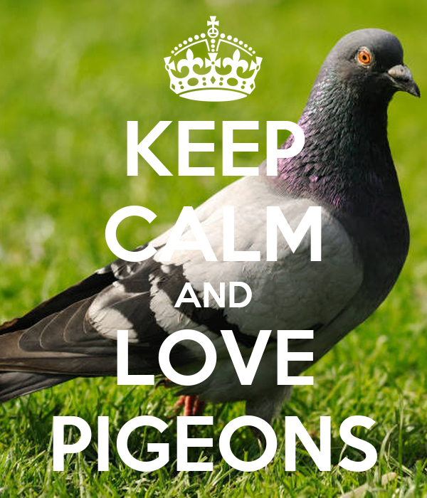 KEEP CALM AND LOVE PIGEONS