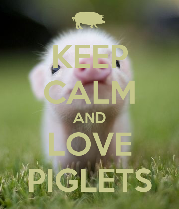 KEEP CALM AND LOVE PIGLETS