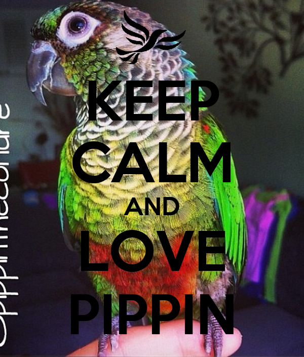 KEEP CALM AND LOVE PIPPIN