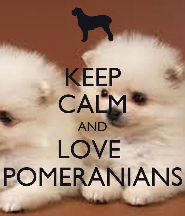 KEEP CALM AND LOVE  POMERANIANS