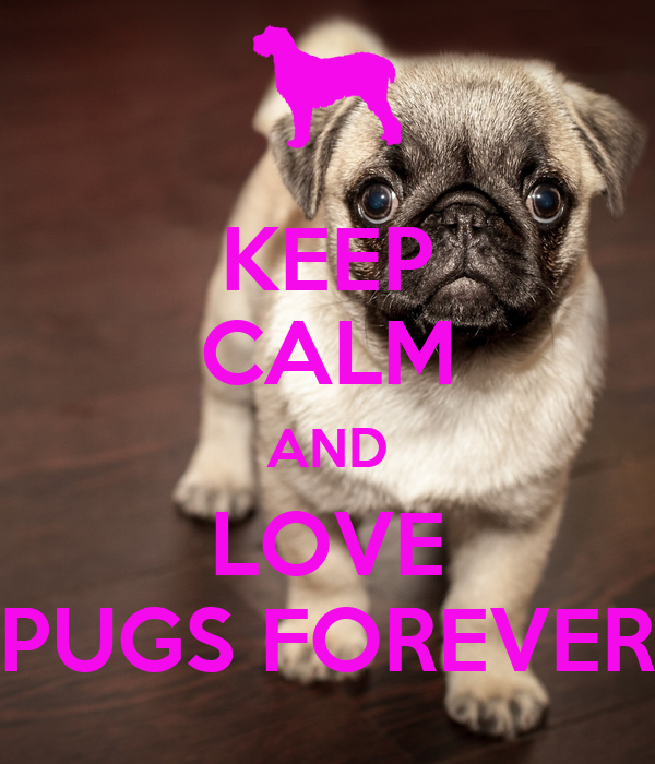 KEEP CALM AND LOVE PUGS FOREVER