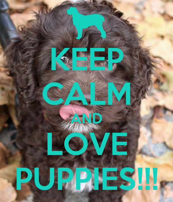 KEEP CALM AND LOVE PUPPIES!!!