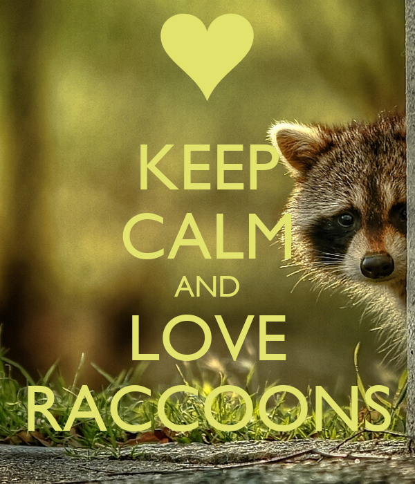KEEP CALM AND LOVE RACCOONS