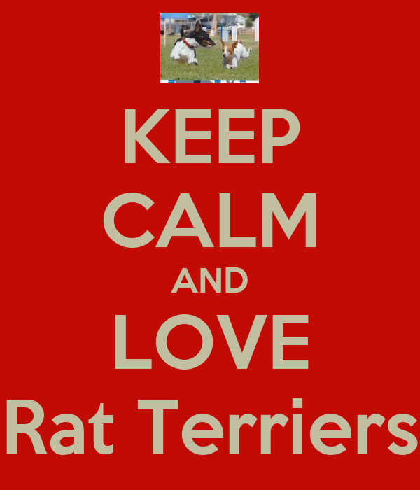 KEEP CALM AND LOVE Rat Terriers