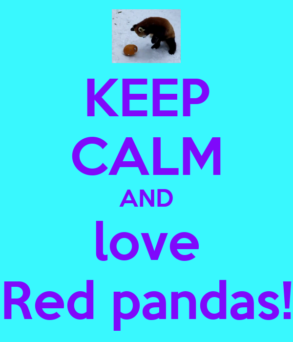 KEEP CALM AND love Red pandas!
