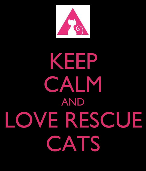KEEP CALM AND LOVE RESCUE CATS