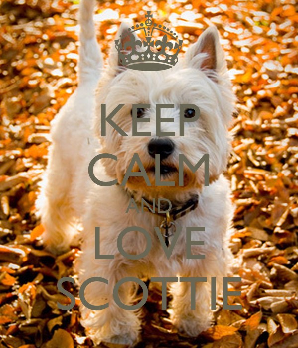 KEEP CALM AND LOVE SCOTTIE