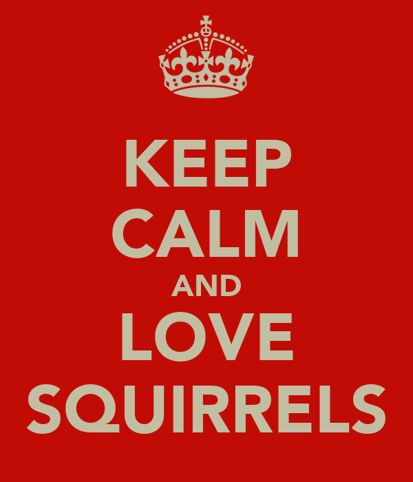KEEP CALM AND LOVE SQUIRRELS