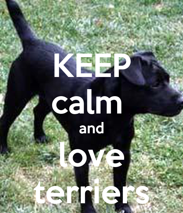 KEEP calm  and love terriers