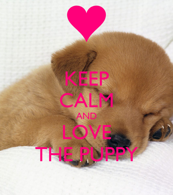 KEEP CALM AND LOVE THE PUPPY