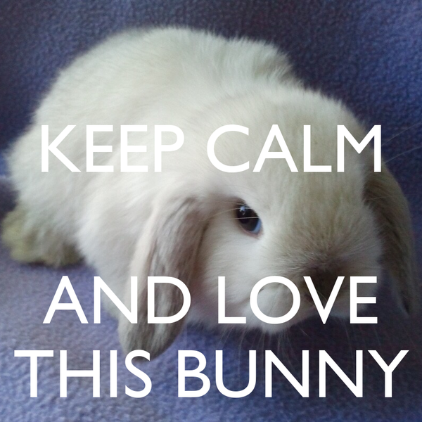 KEEP CALM   AND LOVE THIS BUNNY