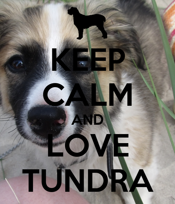 KEEP CALM AND LOVE TUNDRA