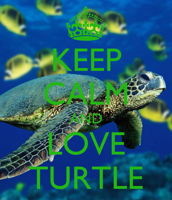 KEEP CALM AND LOVE TURTLE