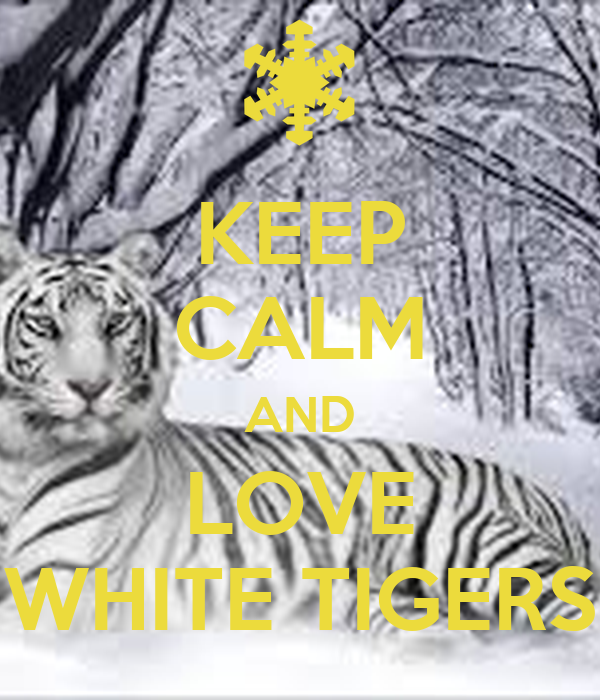 KEEP CALM AND LOVE WHITE TIGERS