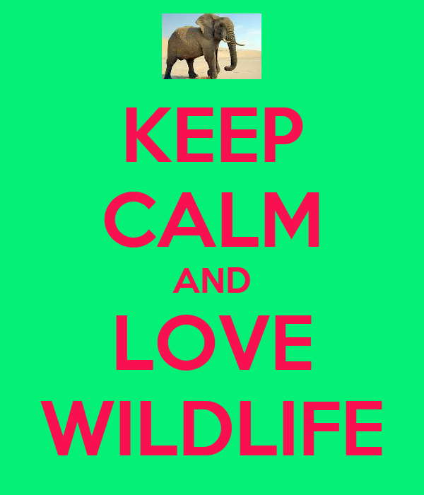KEEP CALM AND LOVE WILDLIFE