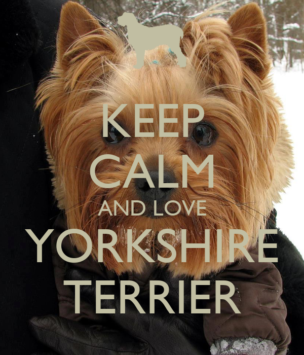 KEEP CALM AND LOVE YORKSHIRE TERRIER