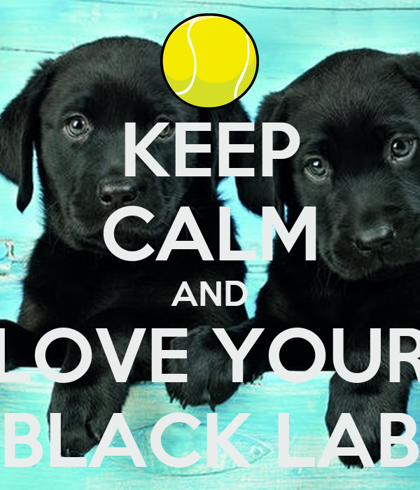 KEEP CALM AND LOVE YOUR BLACK LAB